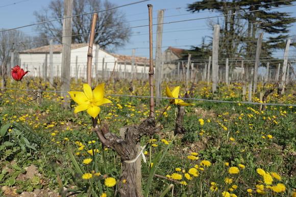 ecomusee du libournais vignes